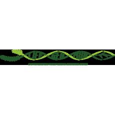 Razvoj sistema monitoringa genetske pestrosti gozdnega drevja