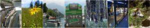 1 LIFE Ljubljanica povezuje, 2 LIFE TO GRASSLANDS, 3 LIFE Stop CyanoBloom, 4 LIFE Gospodarjenje z e-odpadki, 5 LIFEGENMON, 6 Slovenia WEEE Campaign, 7 SloWolf - foto Miha Krofel