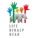 life-dinalp-bear-380x380